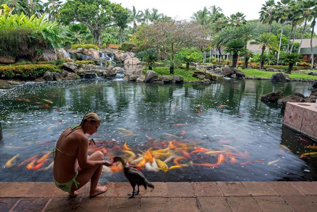 Fish Grotto
