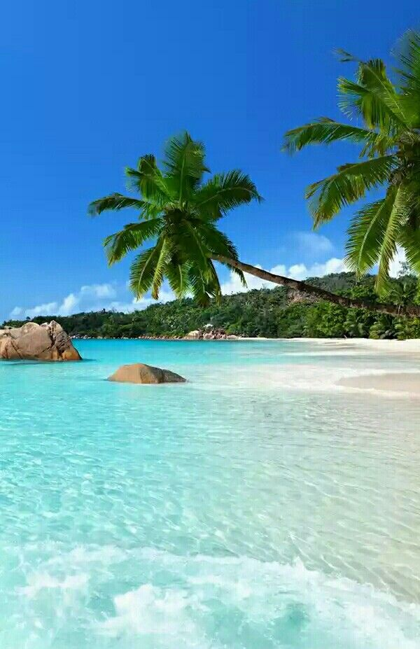 Caribbean is Top Destination