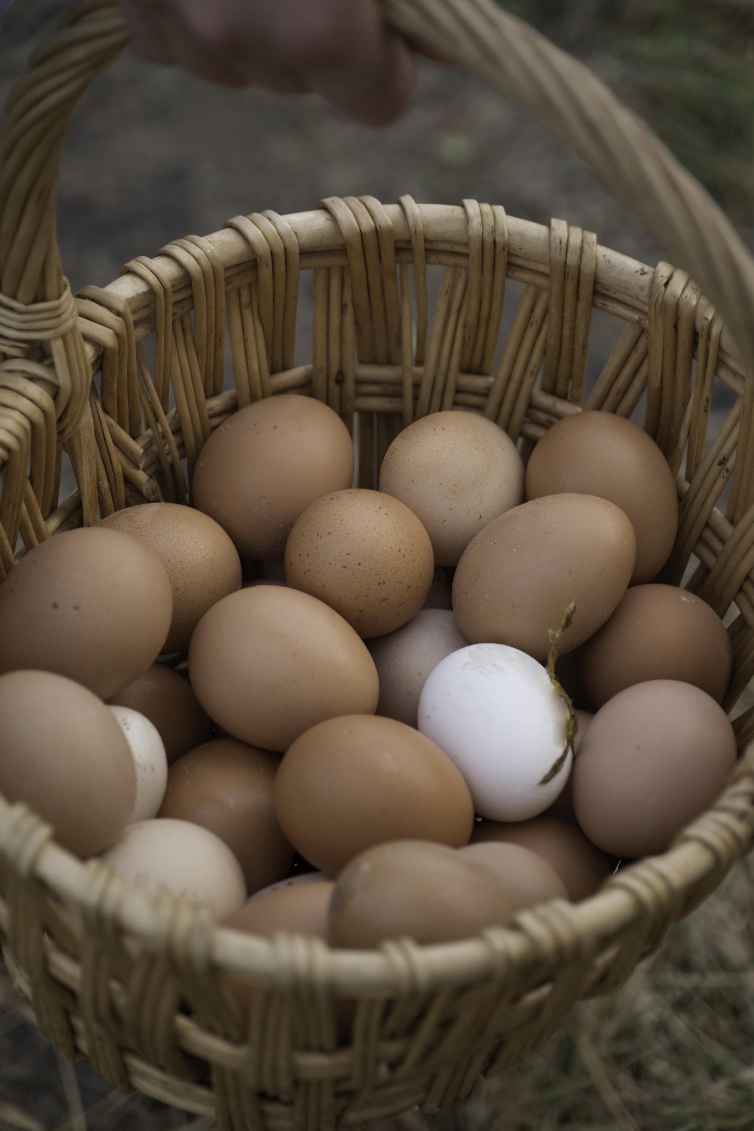 Eggs Combes.jpg