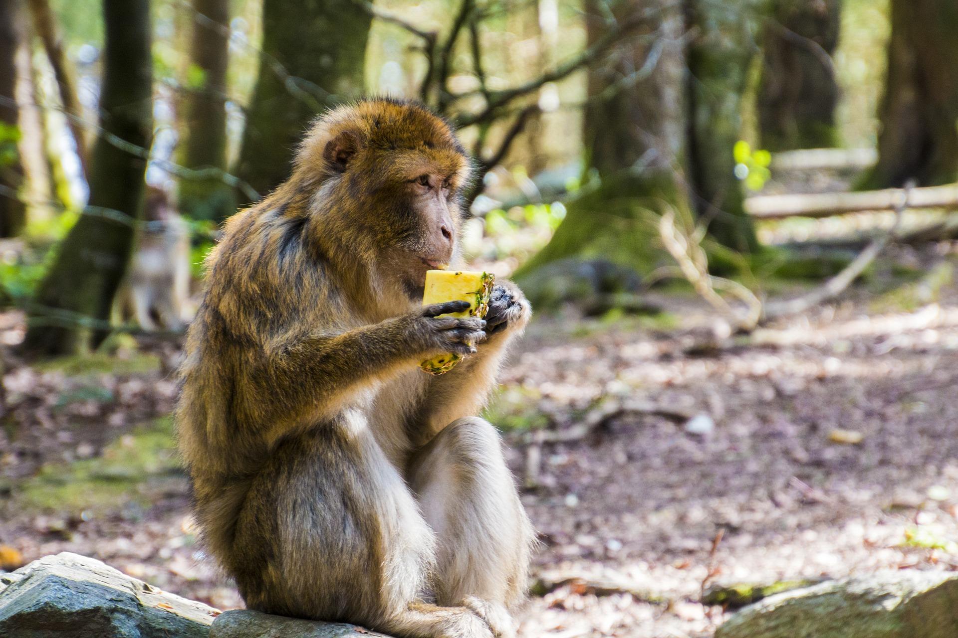 Ep 1: The drunken monkey