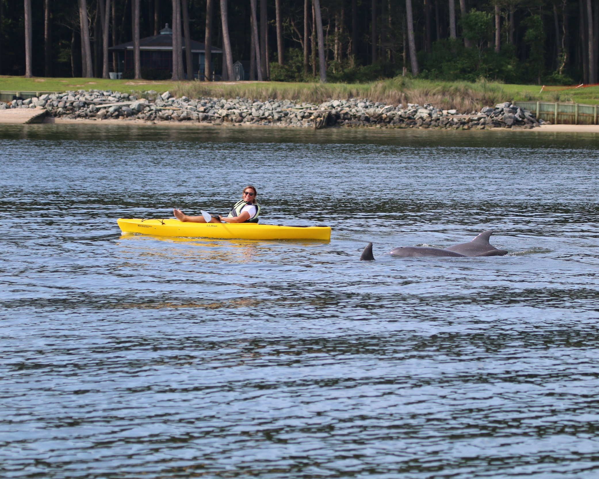 Janet Mann kayaking with dolphins in the Potomac River Photo credit Ann-Marie Jacoby, NMFS permit 19403, Potomac-Chespakeake Dolphin Project.