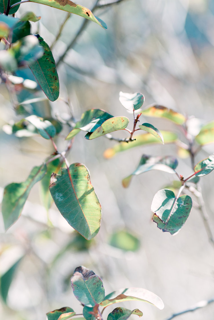Light and airy green leaves, film photography
