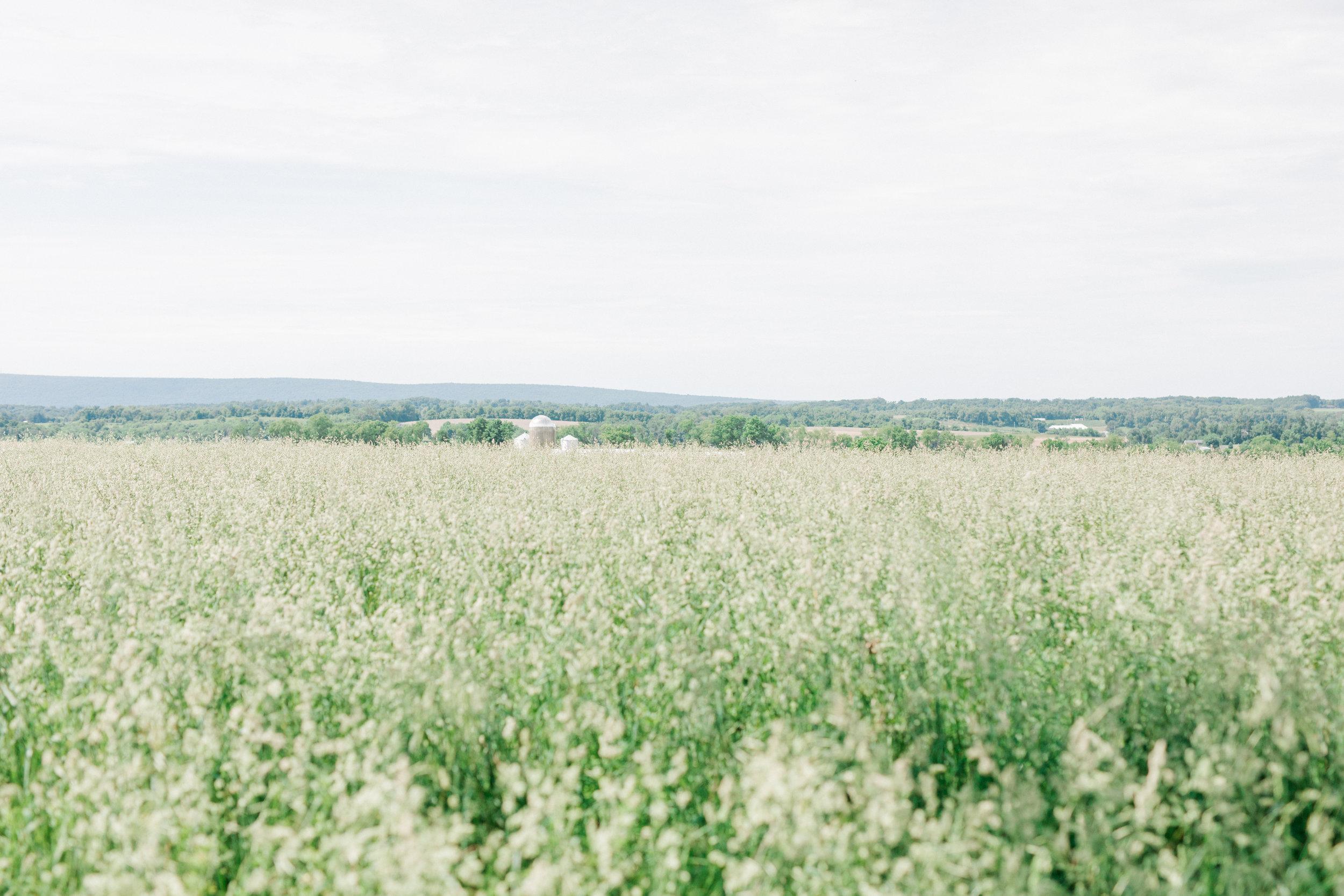 haley-richter-photography-fero-vineyards-summer-wedding-allison-and-josh-winery-pennsylvania-074.jpg