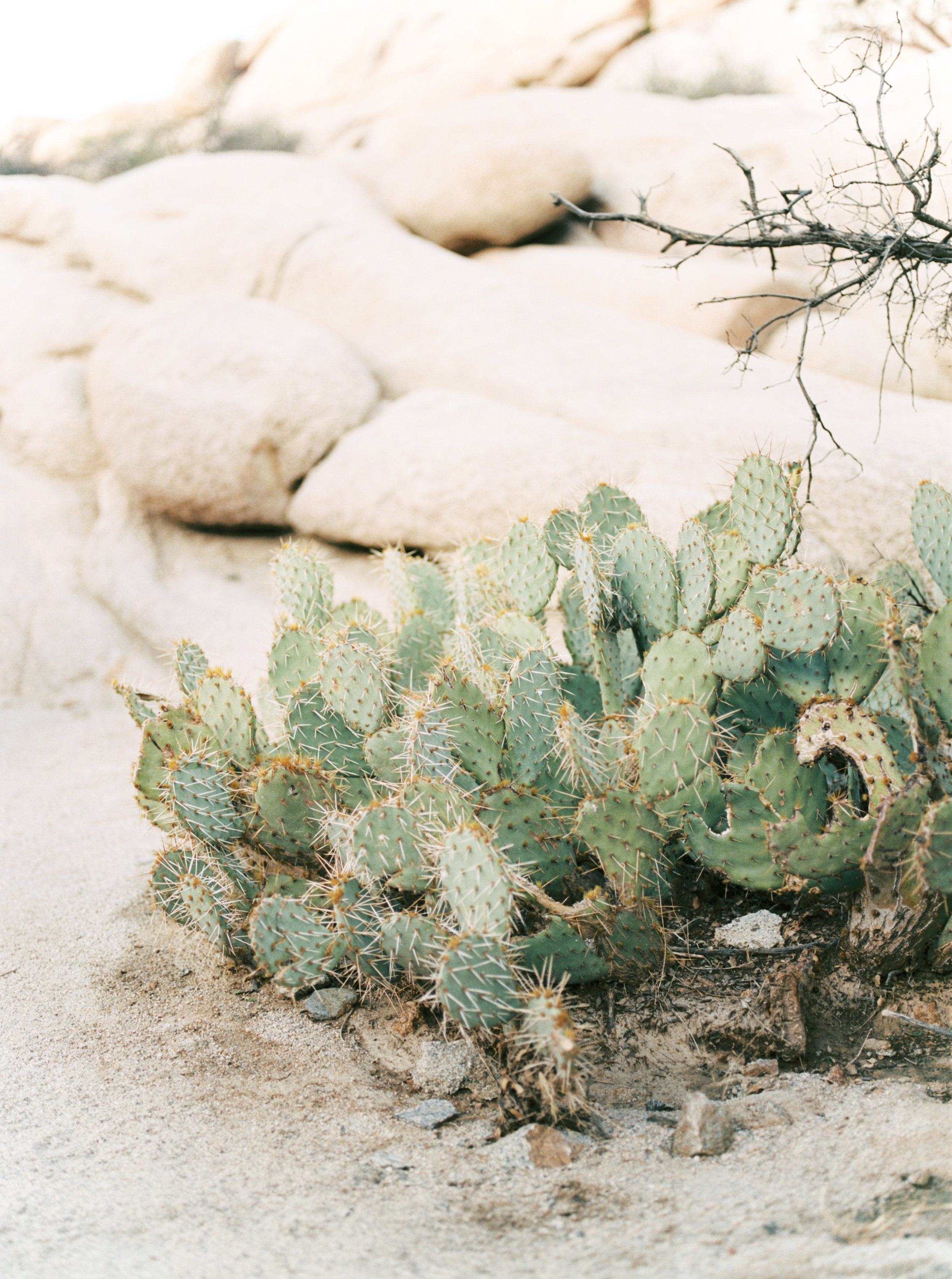 We loved seeing the cacti growing wild out west for this free-spirited desert engagement session in Joshue Tree