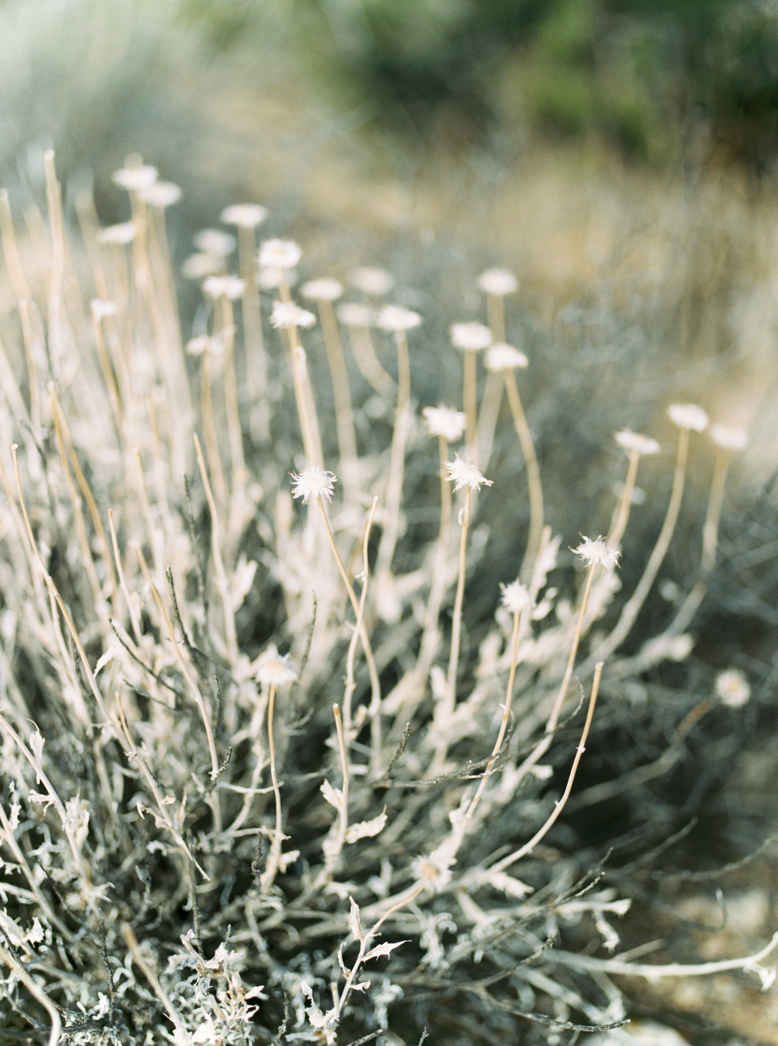Wild flowers add a little femme to this free-spirited desert engagement session in Joshue Tree