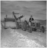 Eiichi Sakauye plows the field around Heart Mountain internment camp.