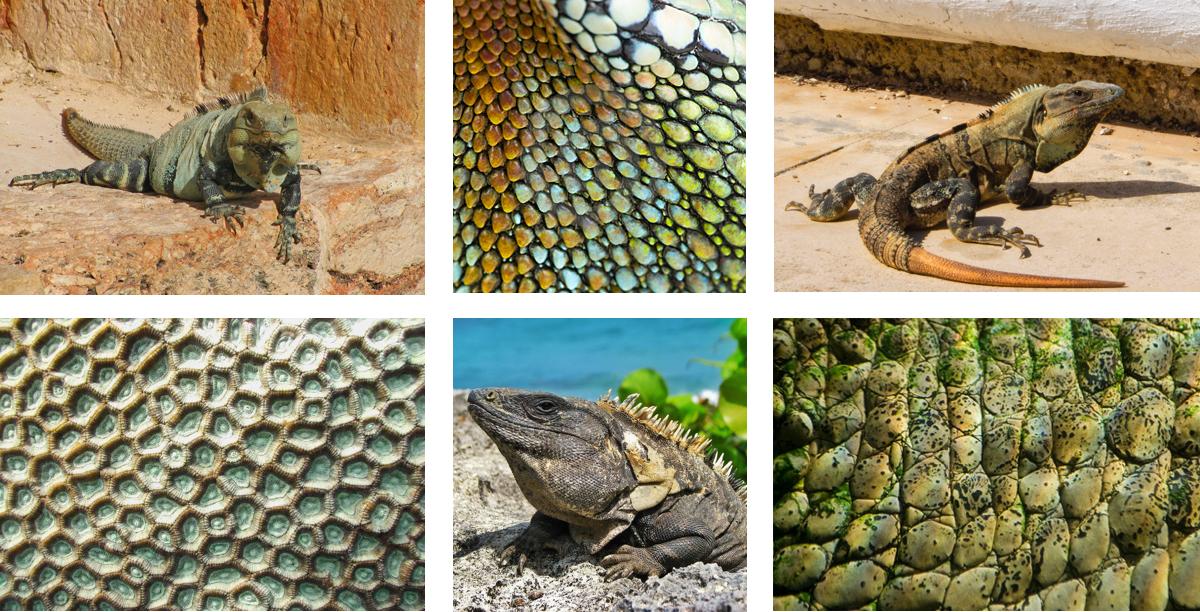 W6_Collage Week 6.jpg