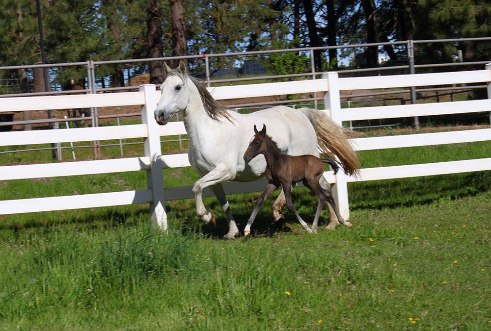 Farm-Horses-1.JPG