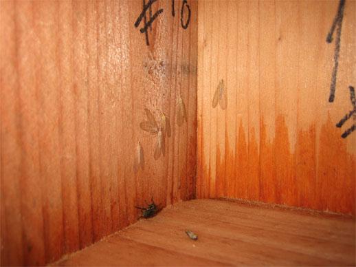Conservation-Bat-Box-Inside-Flies.jpg