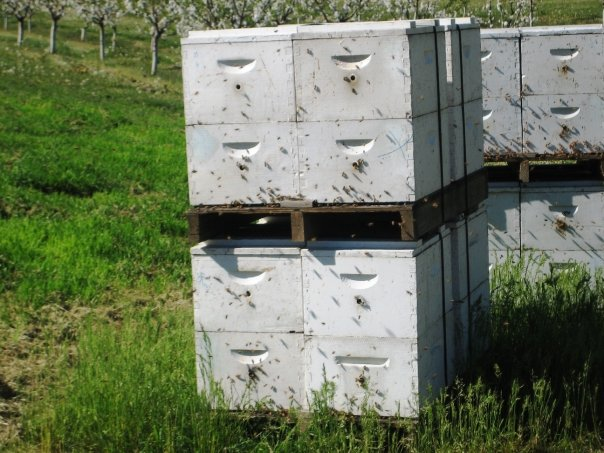 Conservation-Bee-Pollinators-1.jpg