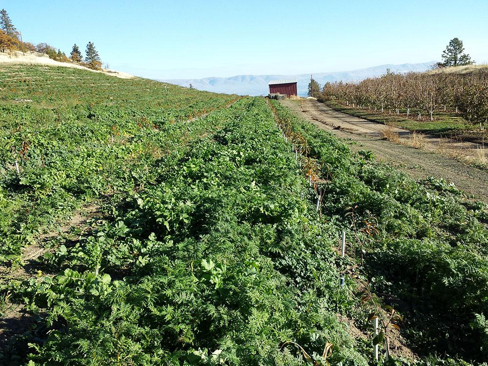 Farm-Vegetables-4.jpg