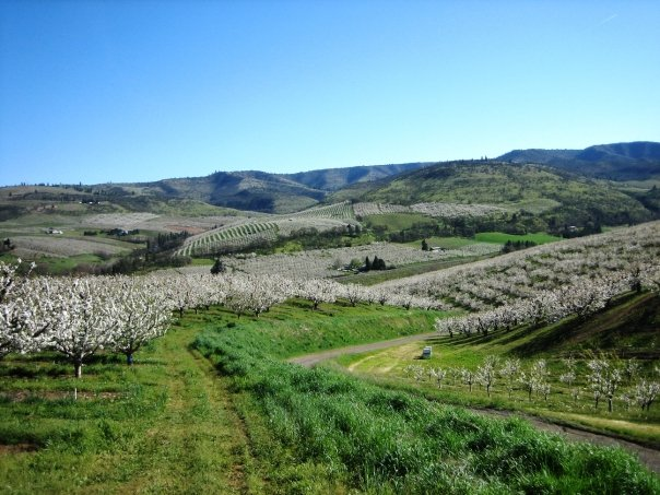 View of Omeg Family Orchards (Image copyright: Dry Hollow Family Orchards, Inc. All rights reserved.)