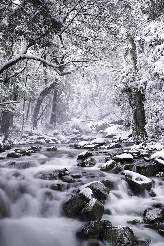 chaos-snow-72dpi.jpg