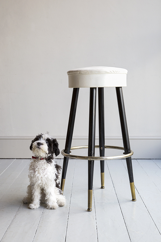 Stool with dog.jpg