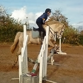 horse-3.jpg