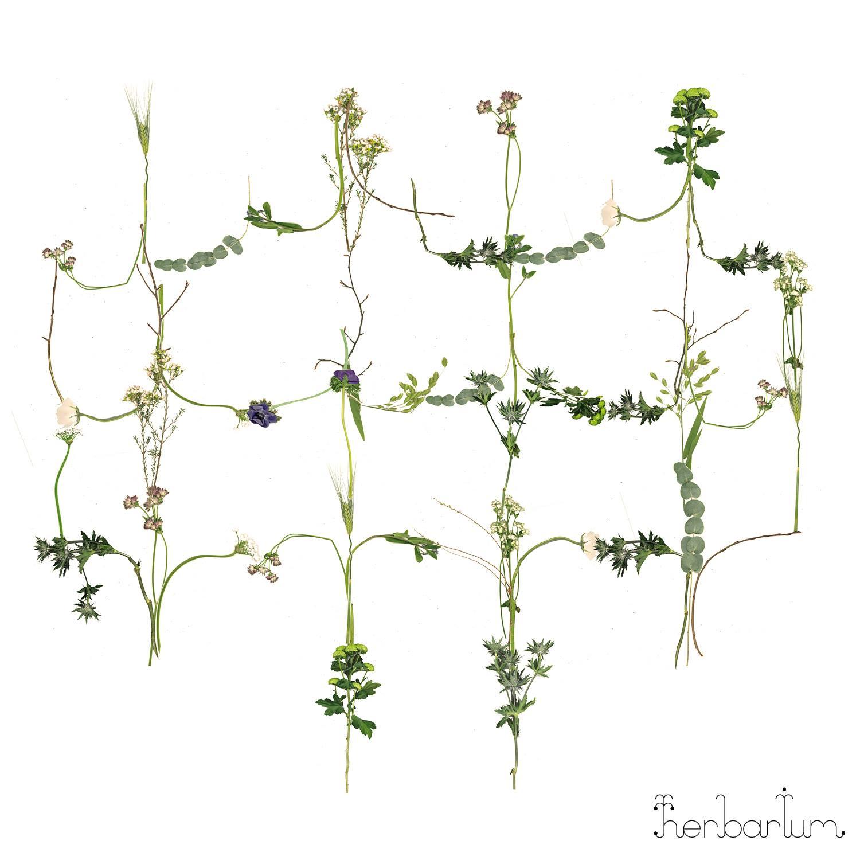 HR033-Herbarium-Cover.jpg