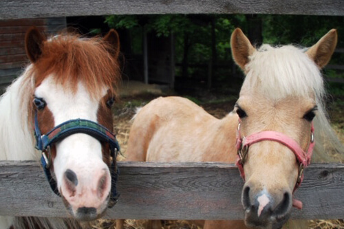 Our Rescues — Bergen County Horse Rescue