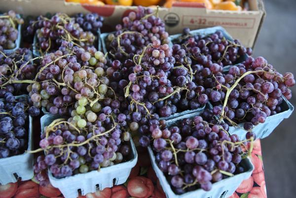 Grapes_c047aa97-a28f-4d9d-88e4-a9781b881f5a.jpg