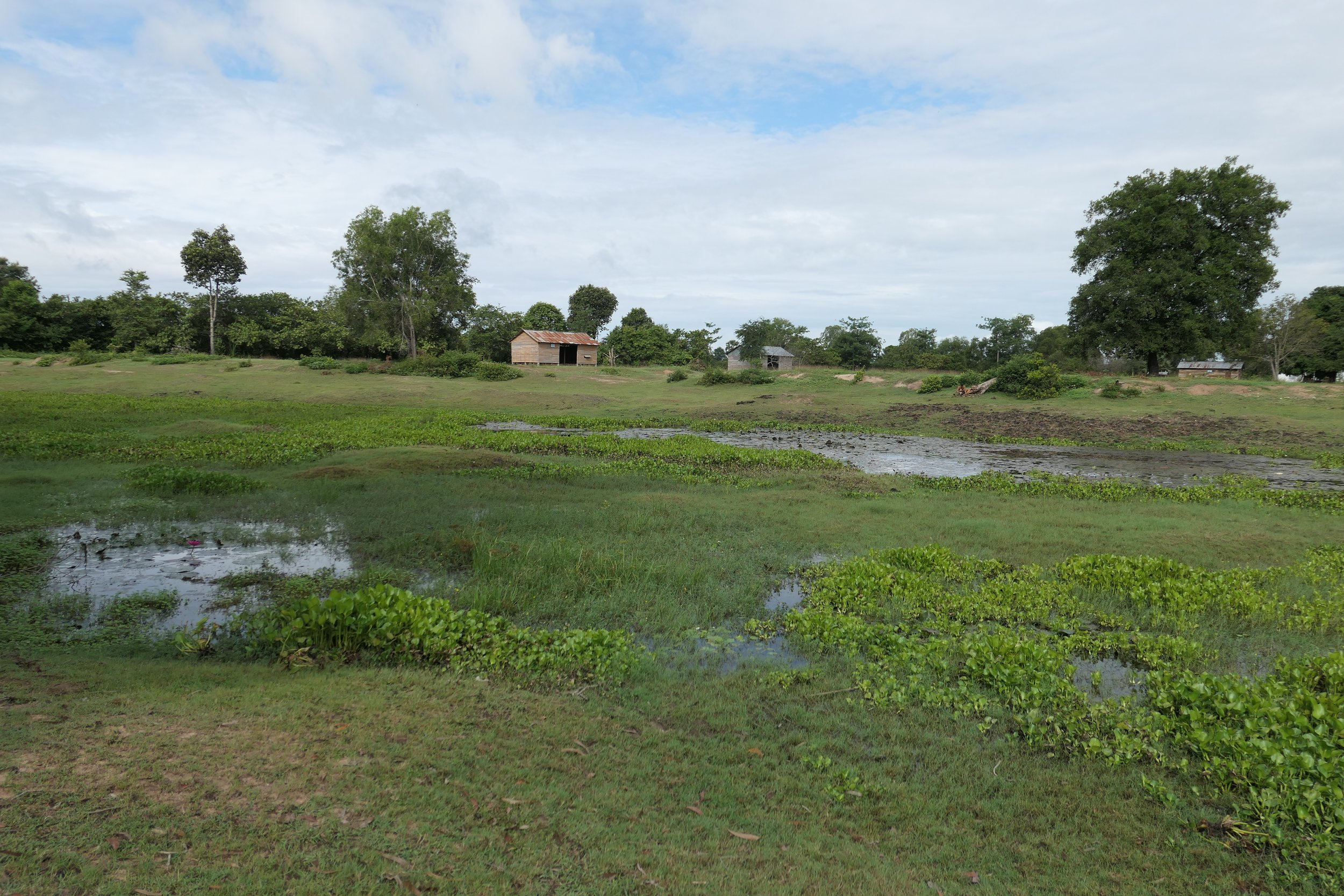 Plot of land neighboring the property on which the school will be built. Since this area used to be a river, we aim to clean and revitalize the premises with the help of the Rolous villagers, so that the nature can return to its original state in the long run.