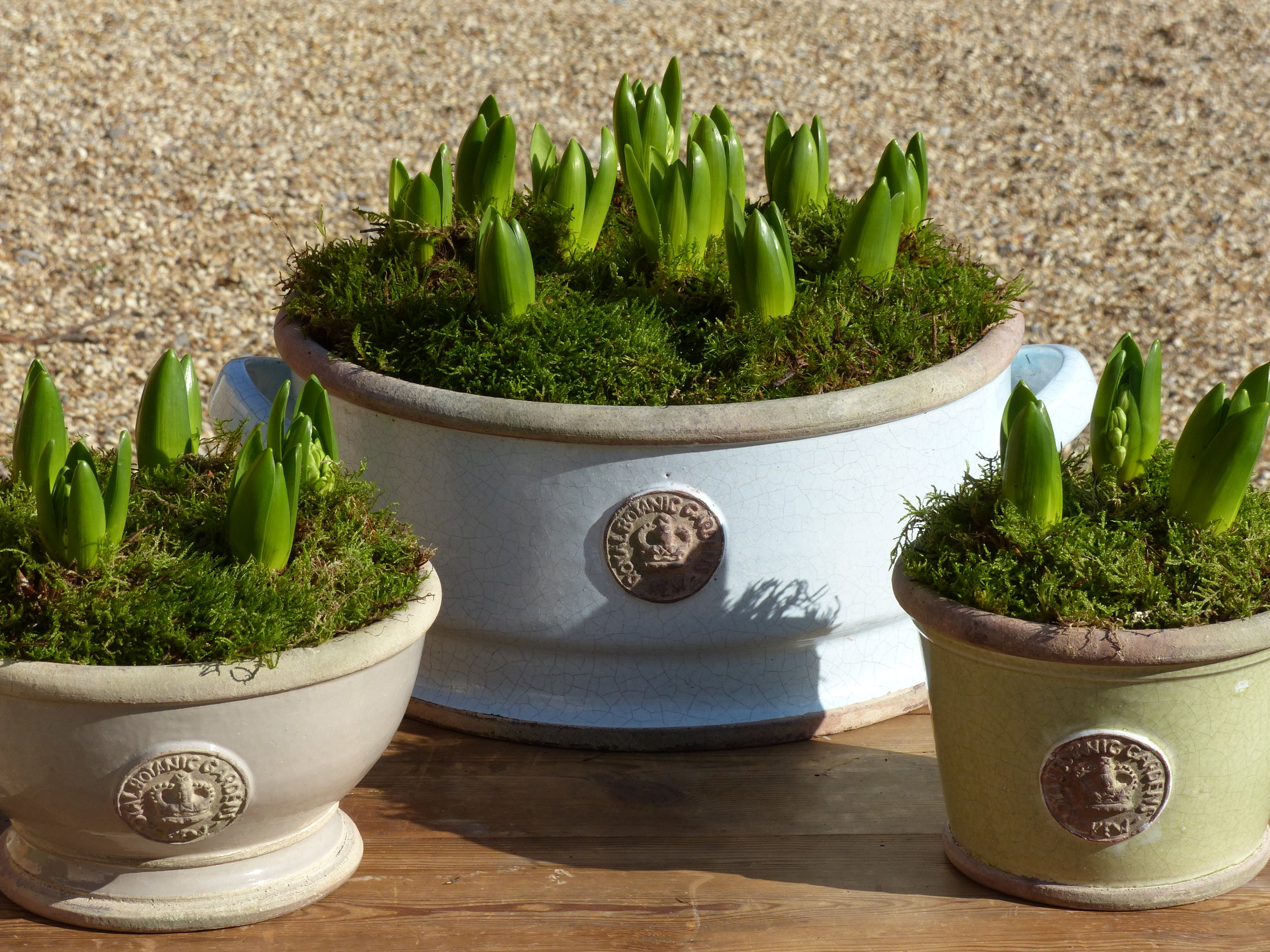 - Selection of Kew bowls planted with Hyacinths - from £30