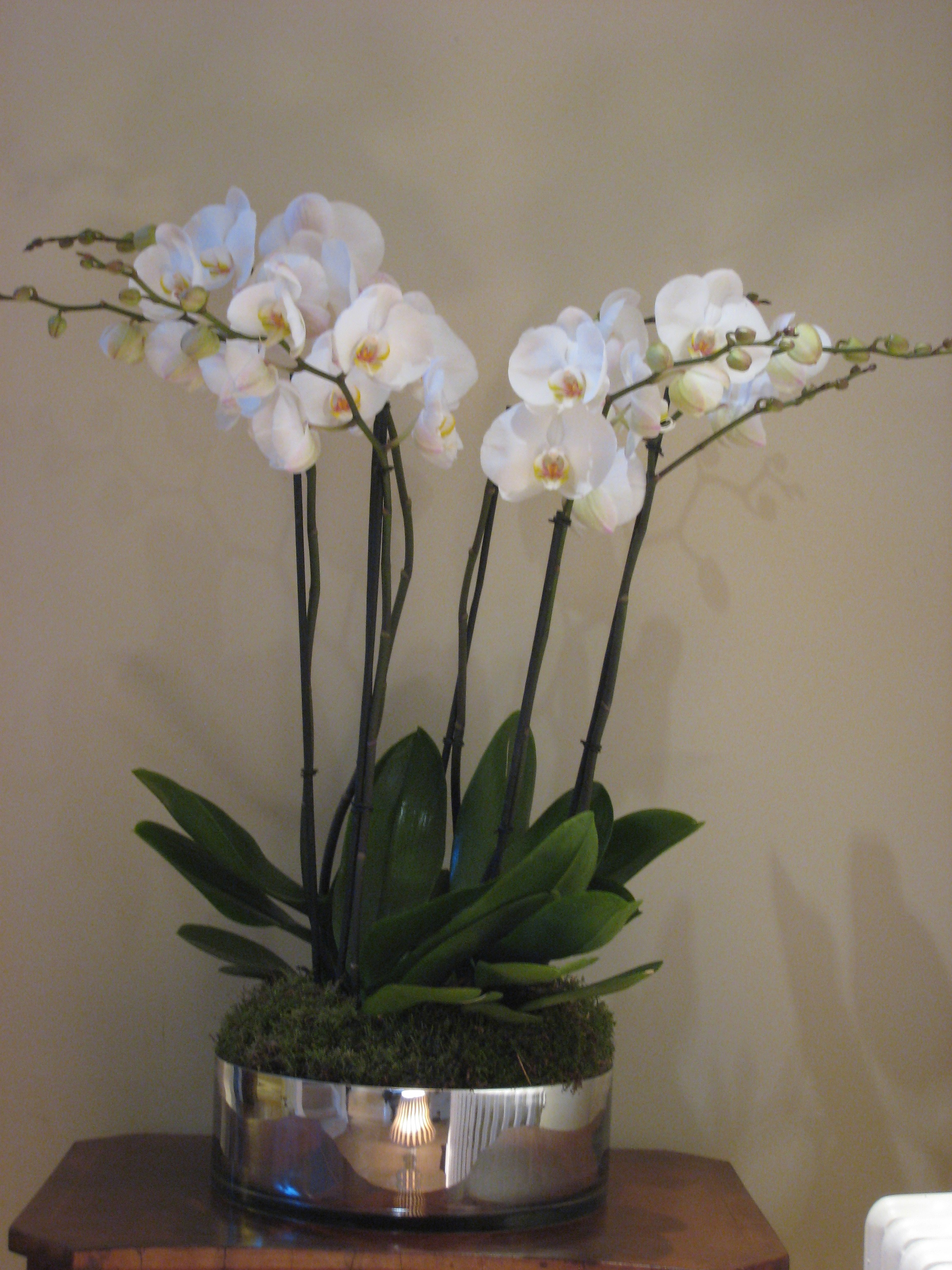 Large mirrored bowl planted with 3 double stemmed orchids - £159 -