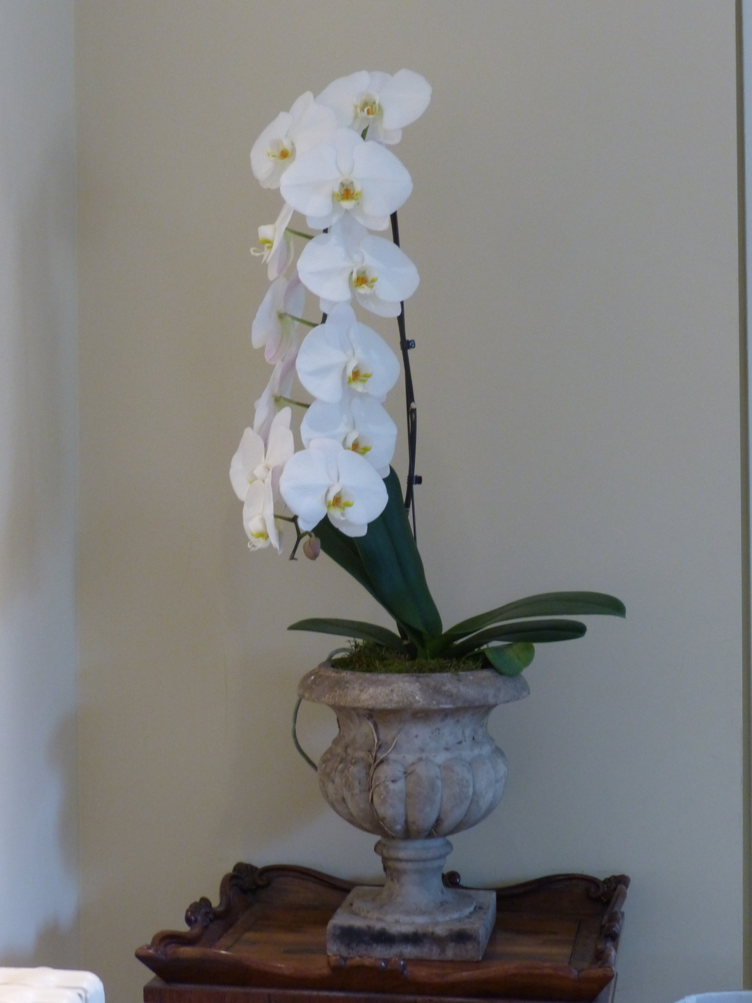 Antique Urn with long single stemmed orchid - £125 -