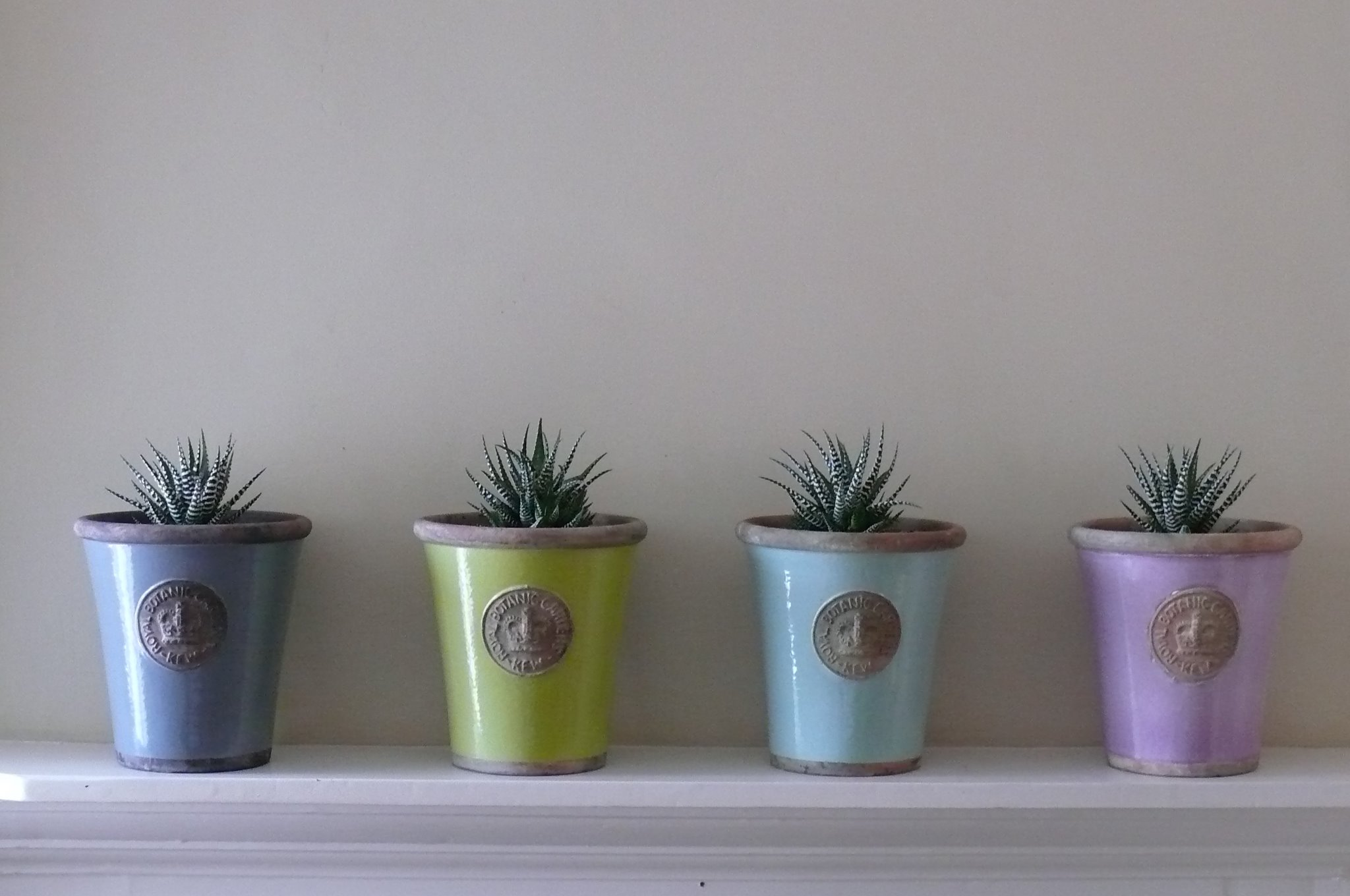 Medium Kew pots planted with Haworthias - £35 each  Empty H: 21 X W: 19CM - £22  Small H: 16 x W: 14cm - £13  Large H: 25 x W: 22cm - £26