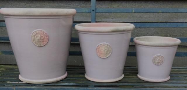 Large Long Tom pots  Large H:20 x W: 23 cm - £28  XL H: 27 x W: 30cm - £42  XXL H: 35 x W: 35cm - £62