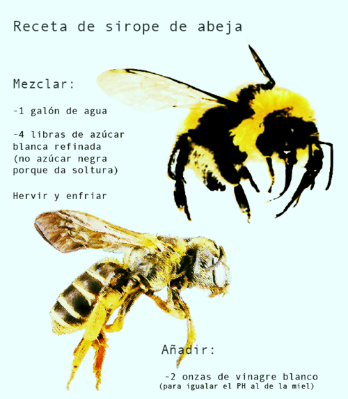 Bee-PNG-7-2.png