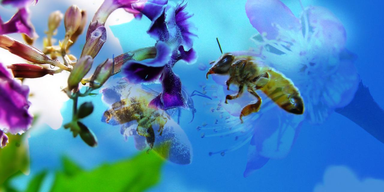 las abejas - ADELAIDA ZORAIDA