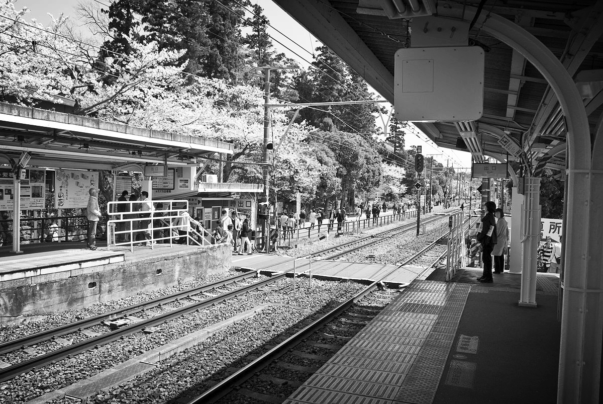 Kita-Kamakura station with its cherry trees in full bloom