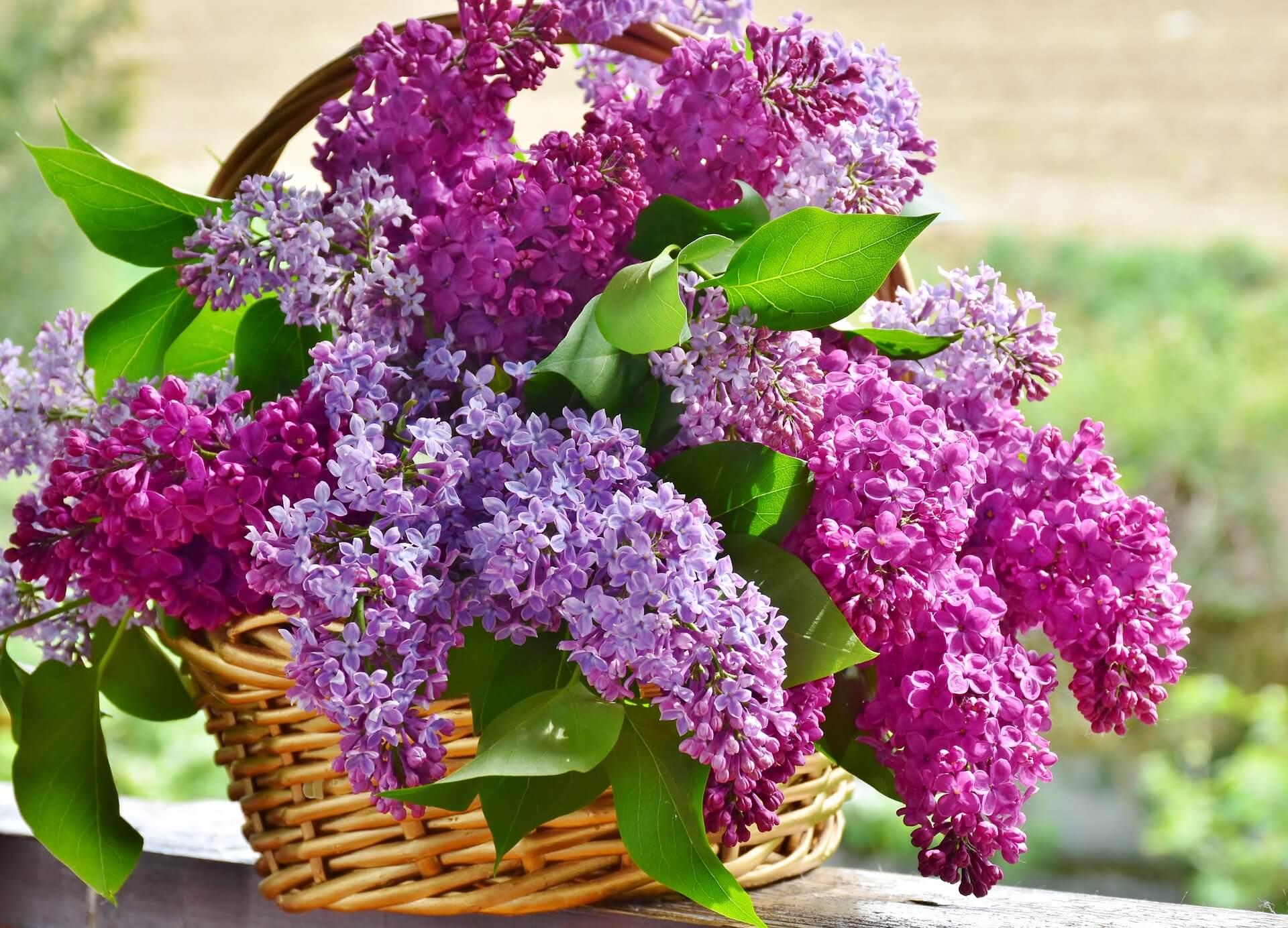 blommor mors dag KryddaDinResa