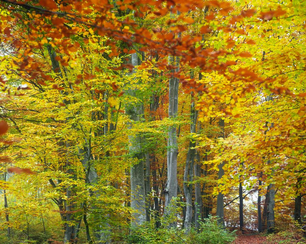 LVM23_woods_LatvianStateForests.jpg