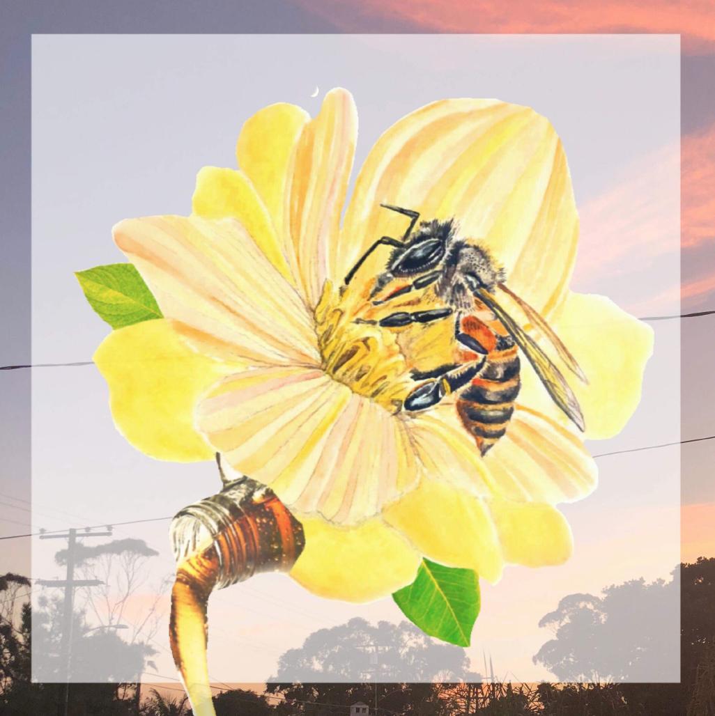 4. Honey - Pilar Herrera Land