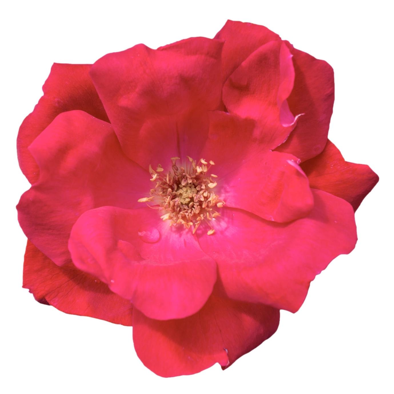 KO_Bloom_2.jpg