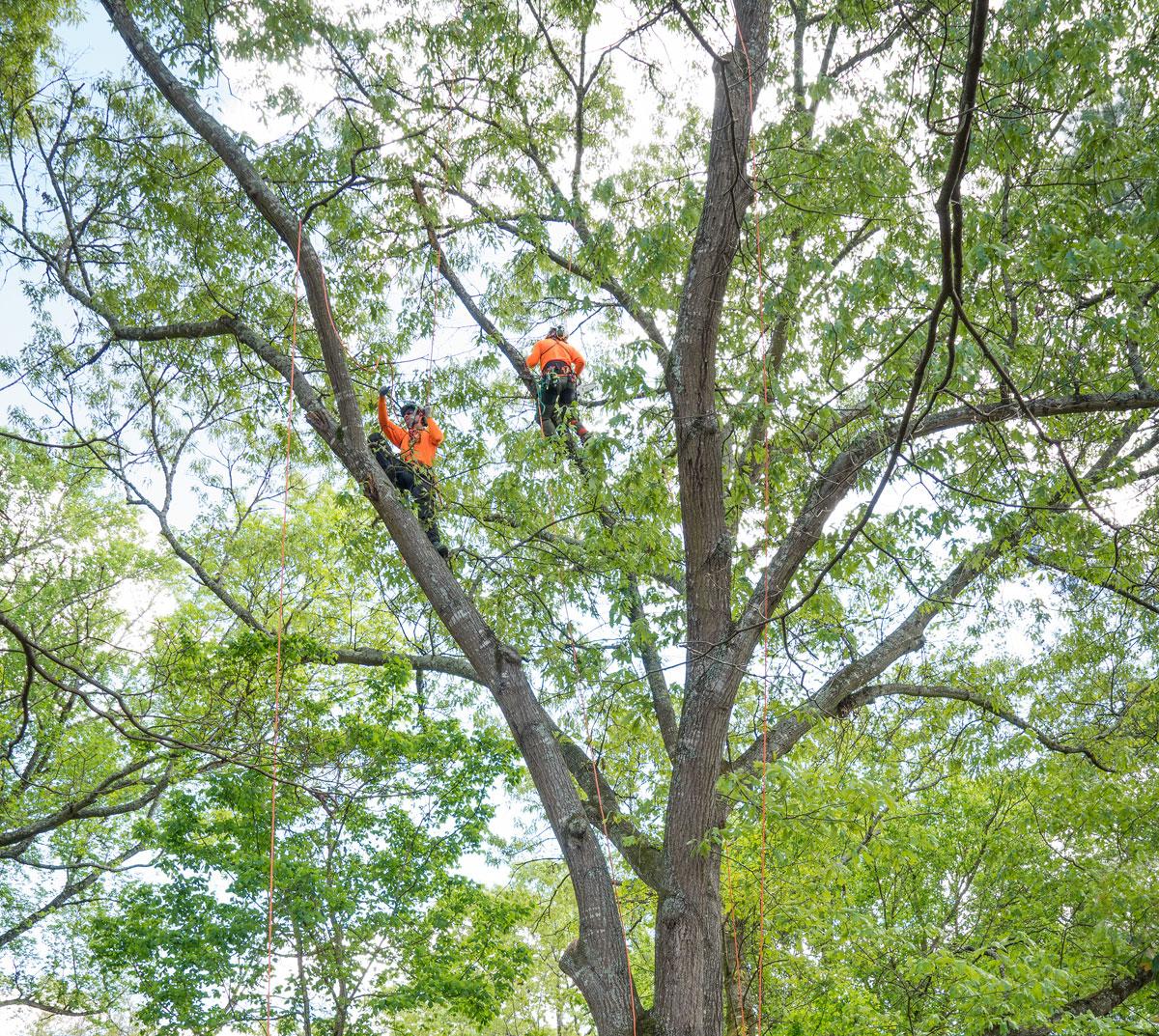 TreeClimbers_NUF.jpg