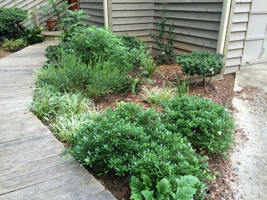 Native Plant Community Design Example at local Athens, Georgia customer home.