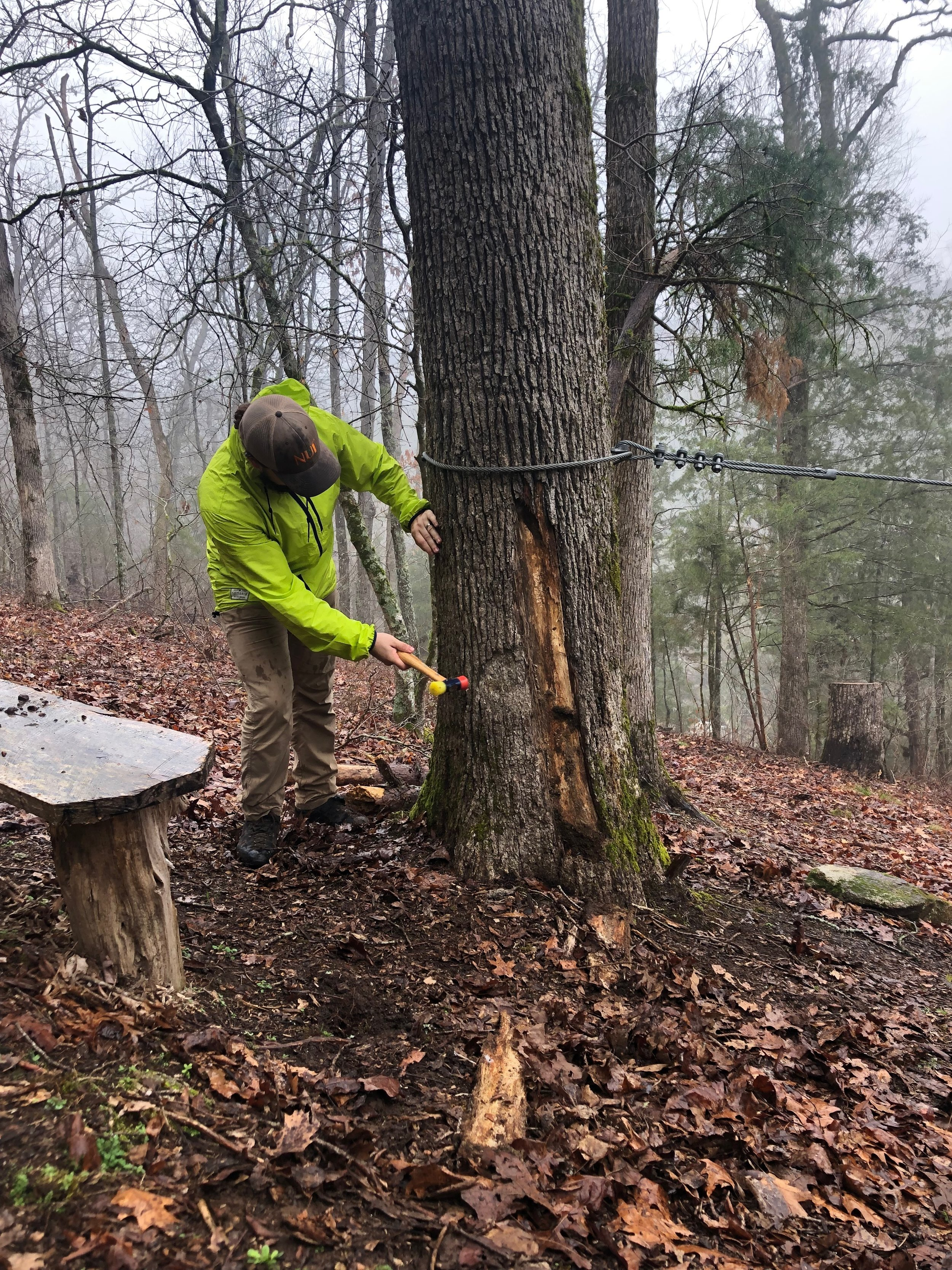 Certified Arborist, Aaron Byer, performs a tree risk assessment analysis on a tree that was struck by lightning. Byer is certified by the International Society of Arboriculture to perform Tree Risk Assessments.