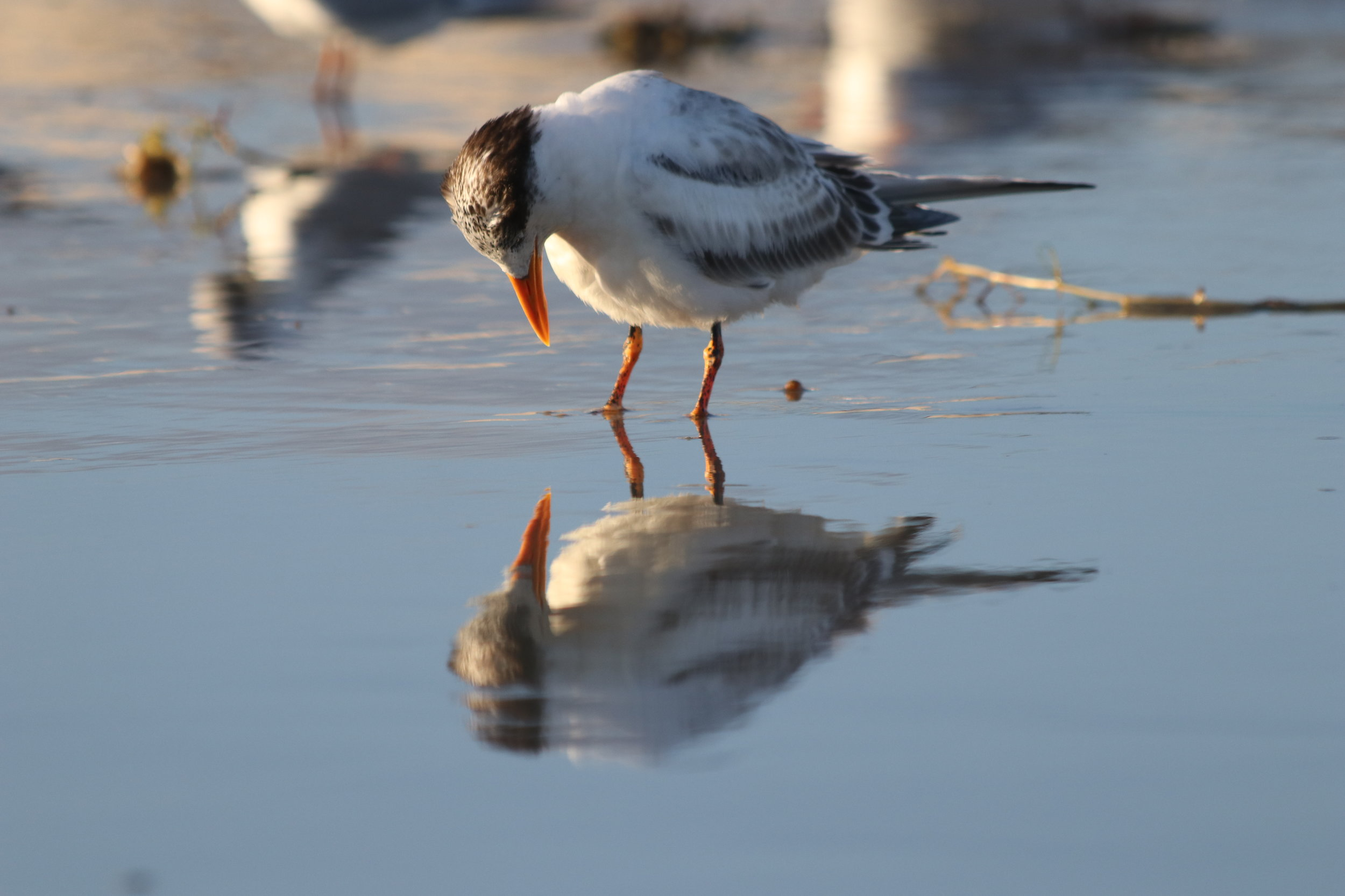 Grace the Tern, Fall in Love with Yourself