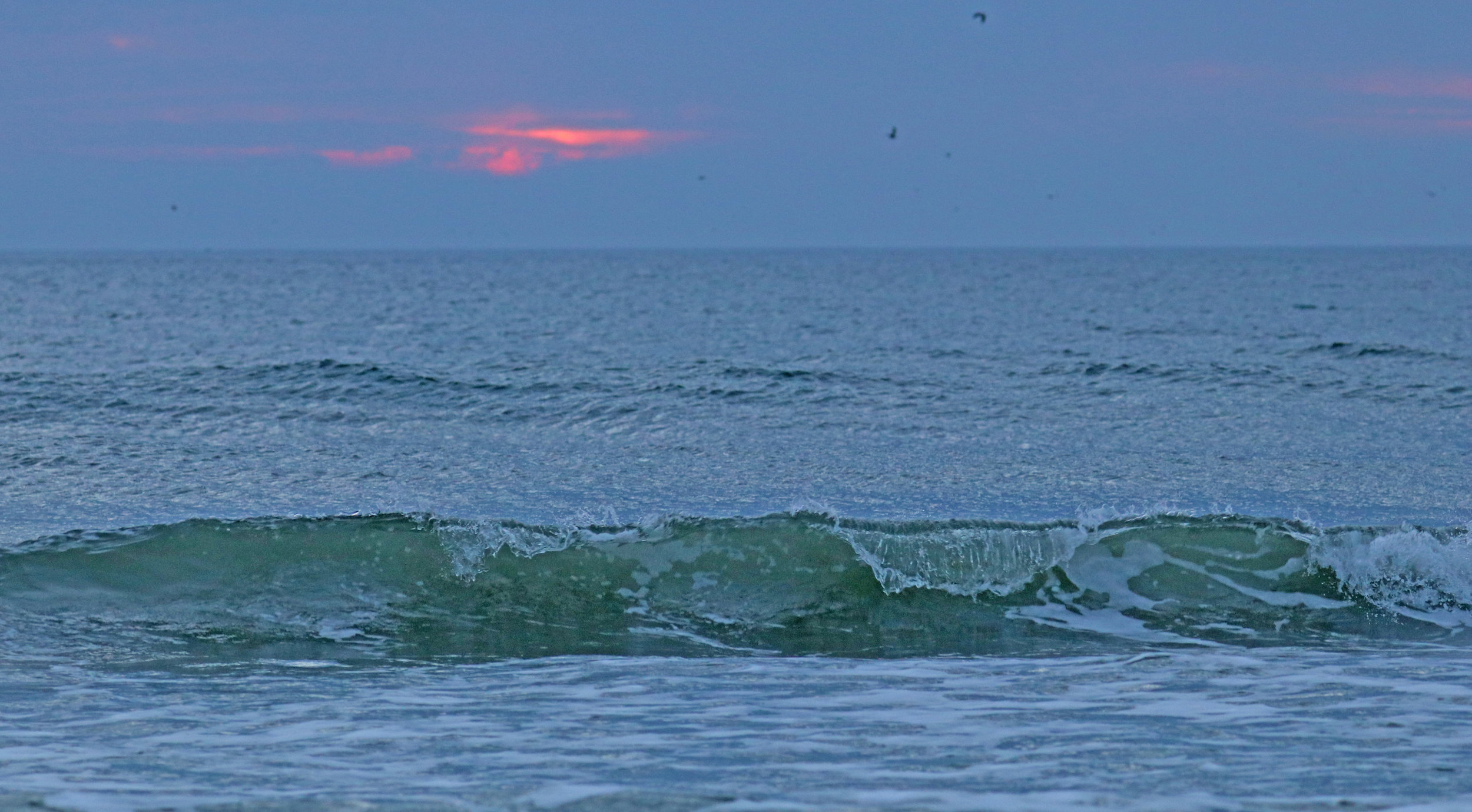 There is a dolphin in the center of the wave.  I was really wishing the sun was up for this photo.