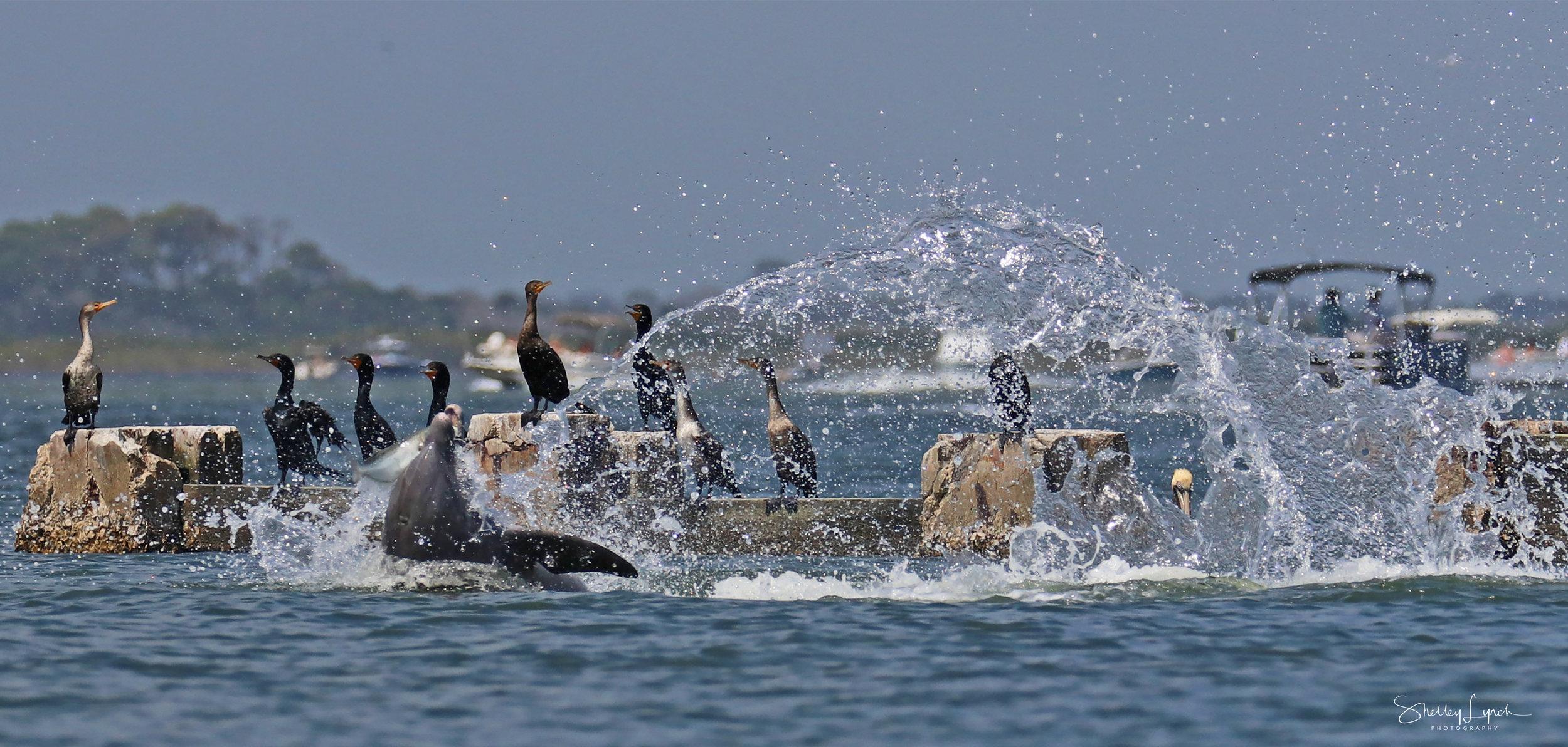 Cormorants hanging in the splash zone.