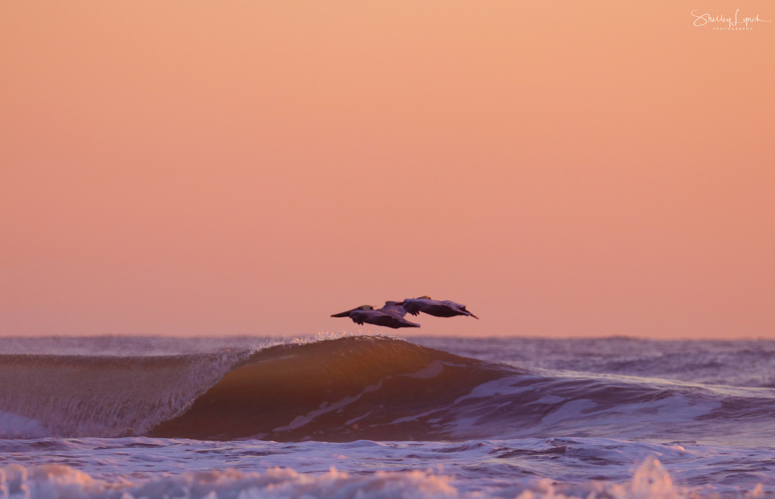 Pre sunrise surfing