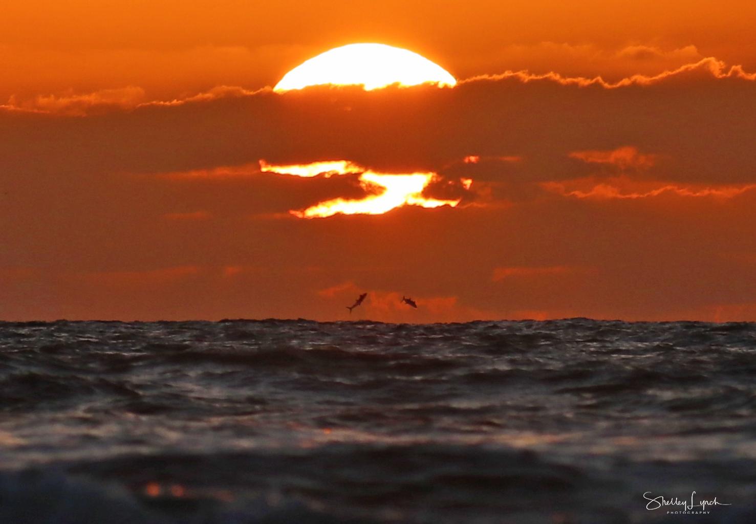 Fish jumping below the sun