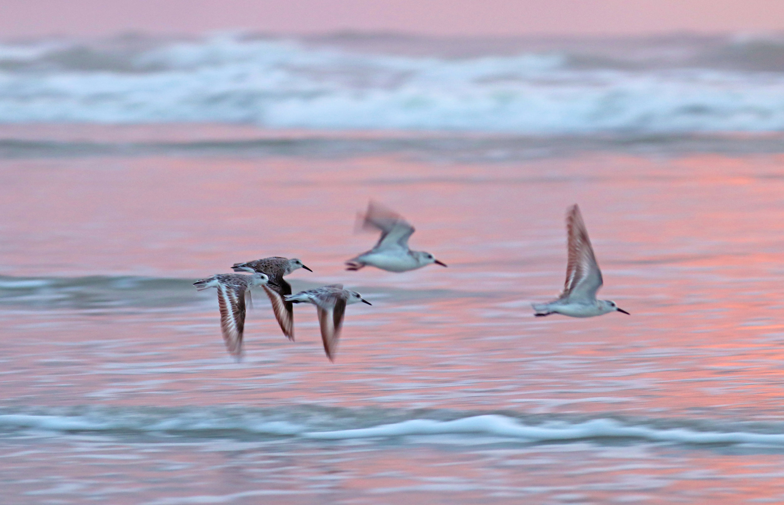Flow of Willets