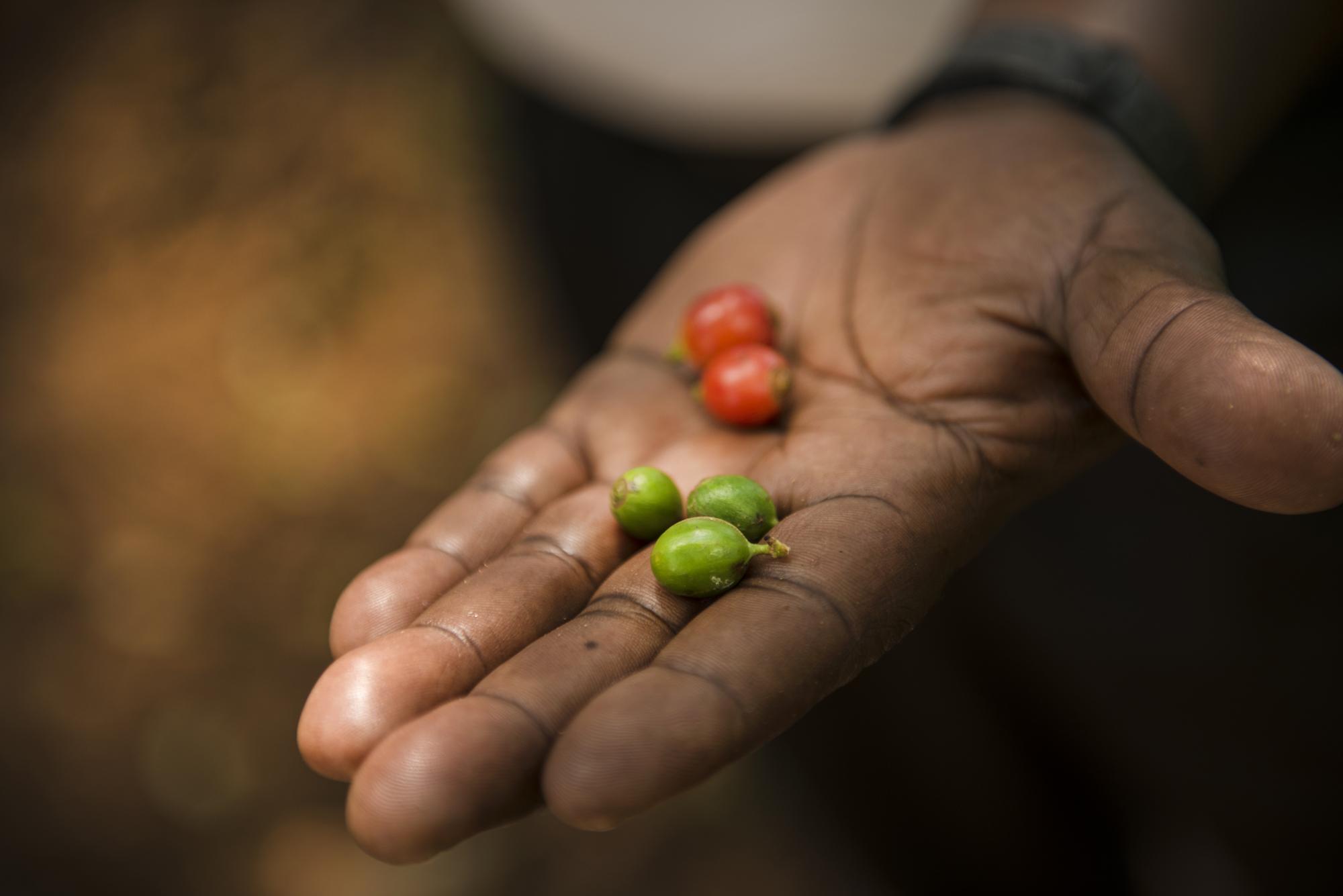 pepper in hand.jpg