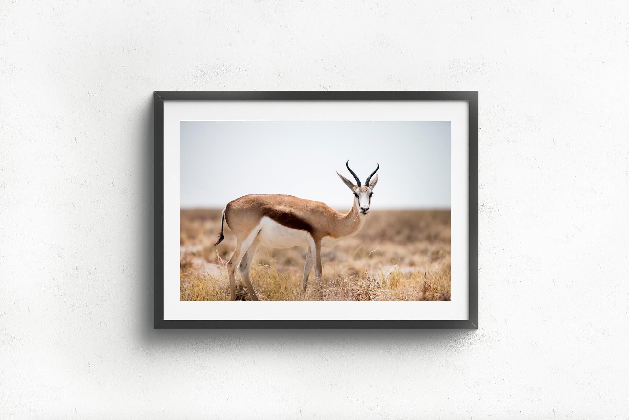 Antilop.jpg