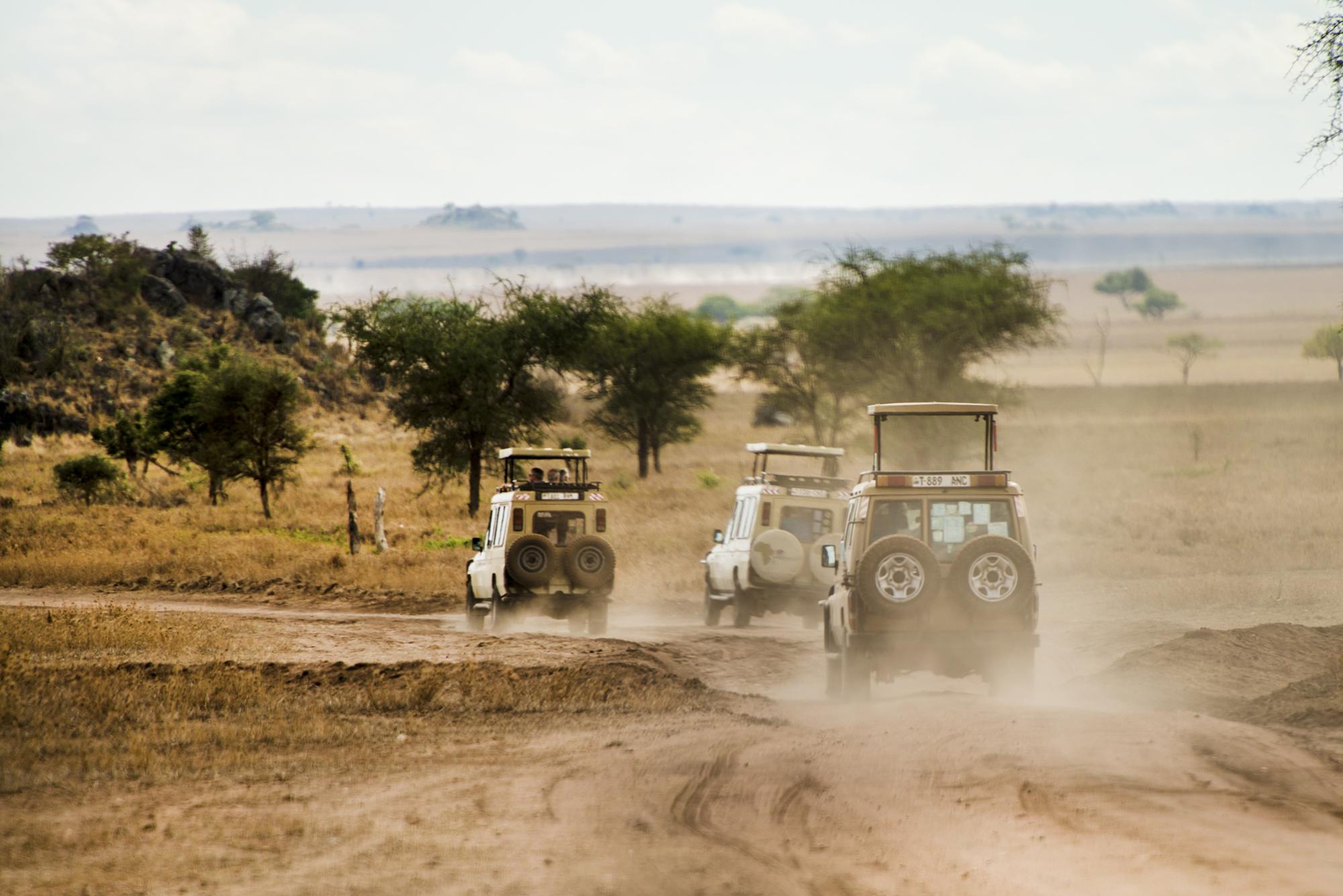 safari 2.jpg