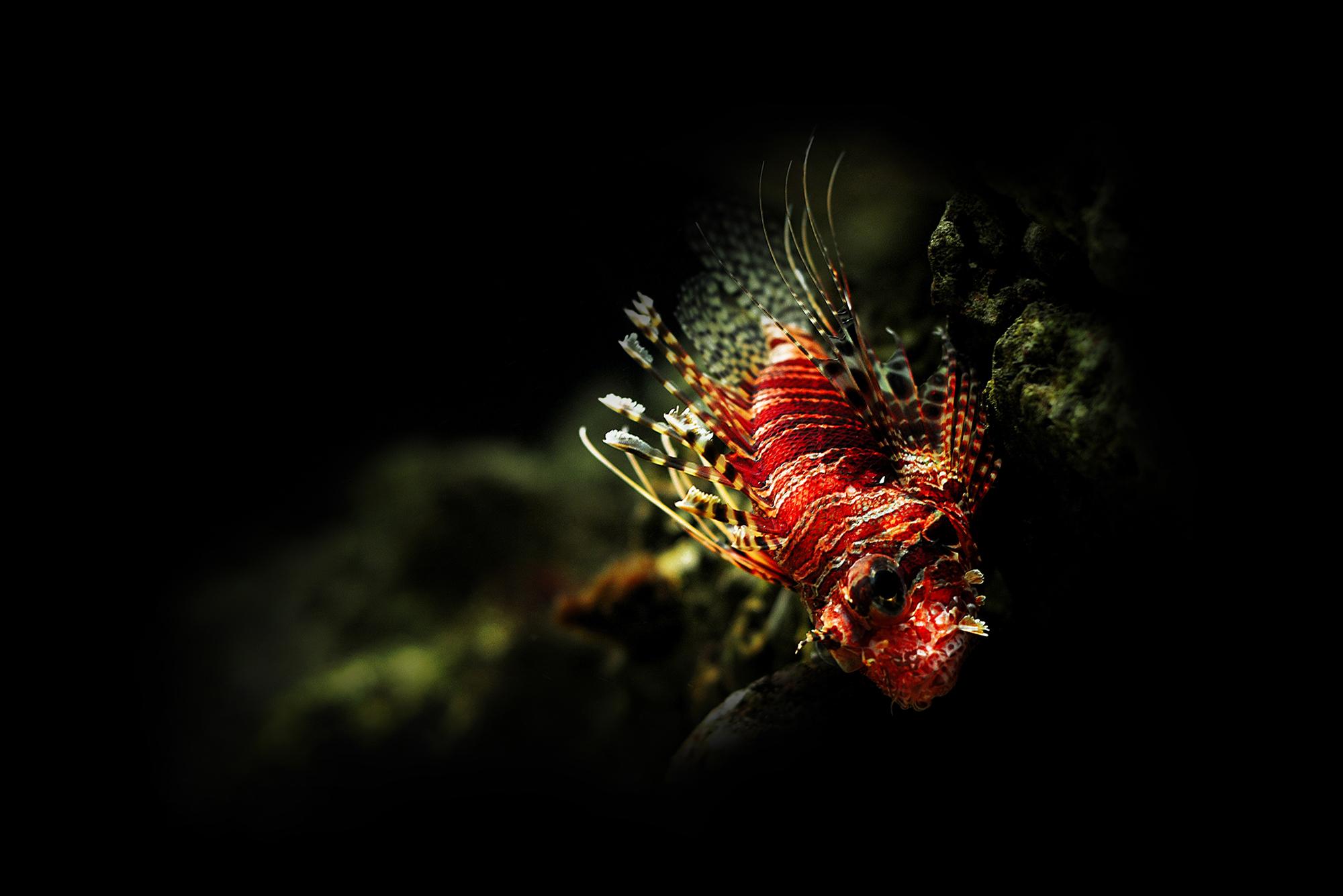 Dragonfish.jpg