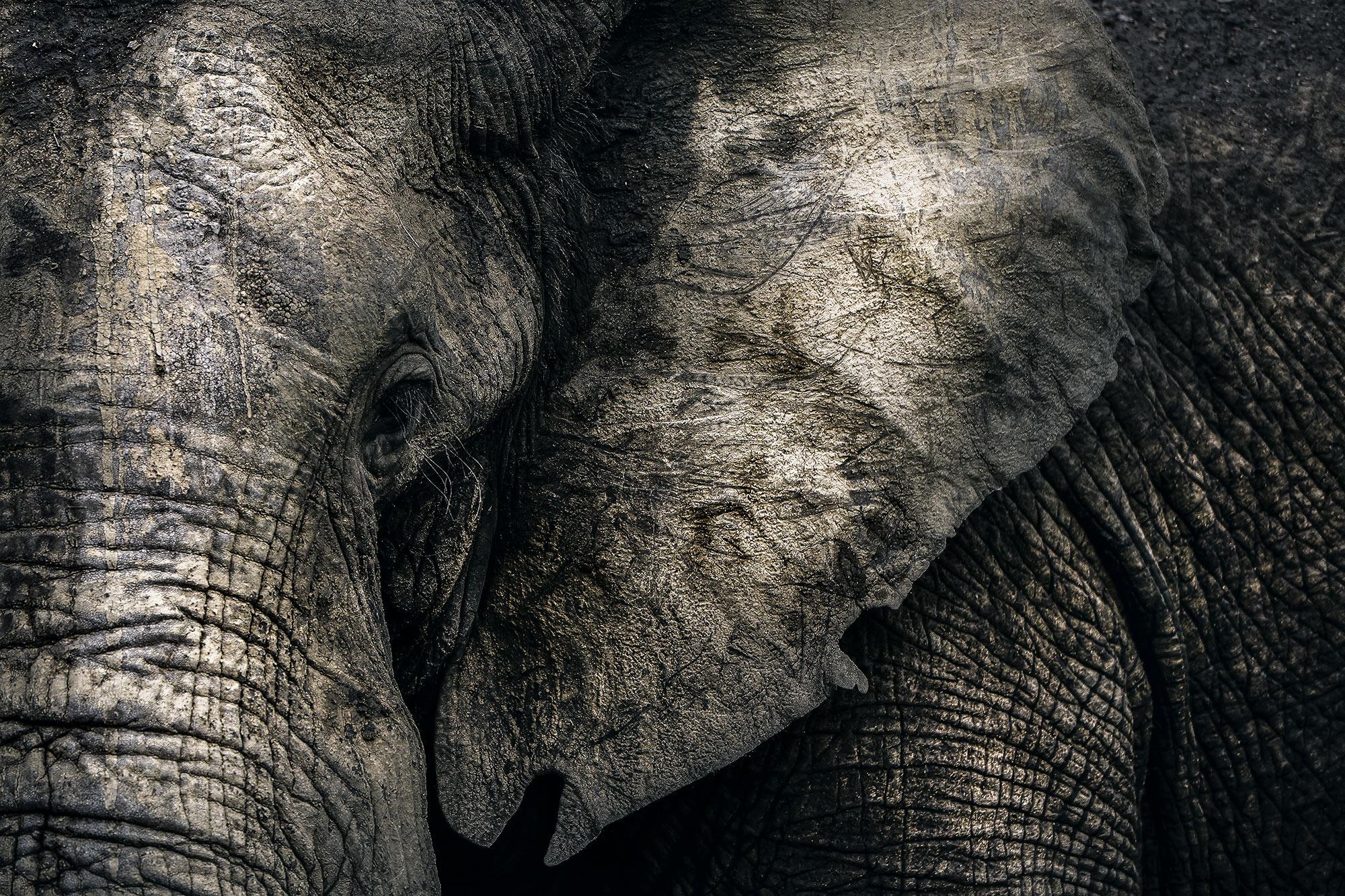 elephant-kruger-park-south-africa.jpg