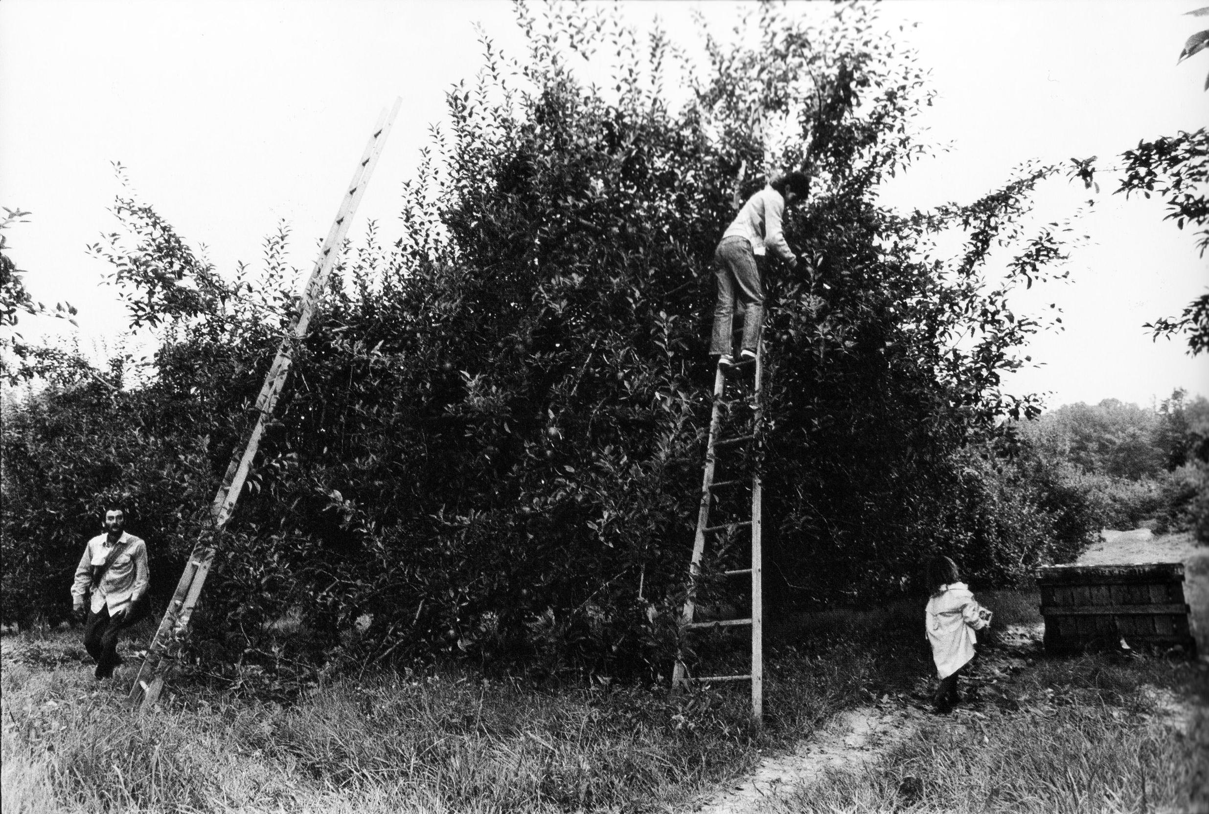 L.H., Linda, and Tina Michelle picking apples, near Dana, NC.